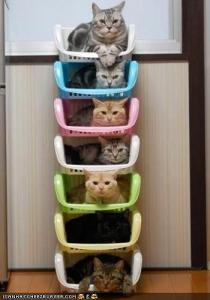 stack-o-cats.jpg